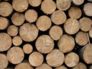 drewno-300.jpg